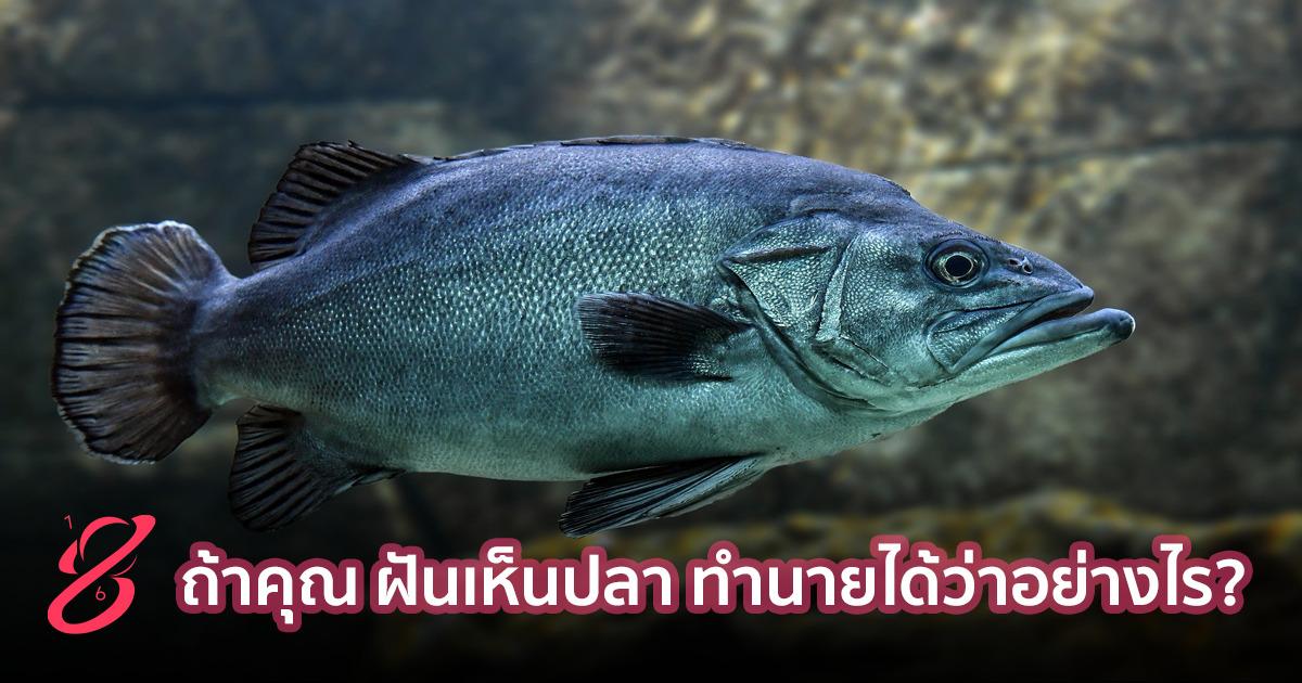 ถ้าคุณ ฝันเห็นปลา ทำนายได้ว่าอย่างไร?
