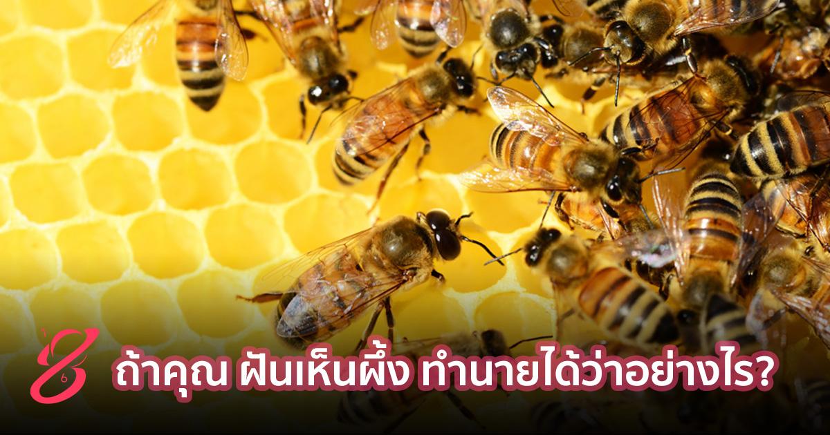 ถ้าคุณ ฝันเห็นผึ้ง ทำนายได้ว่าอย่างไร?