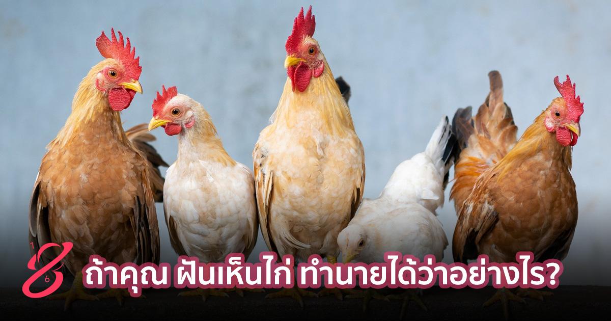 ถ้าคุณ ฝันเห็นไก่ ทำนายได้ว่าอย่างไร?