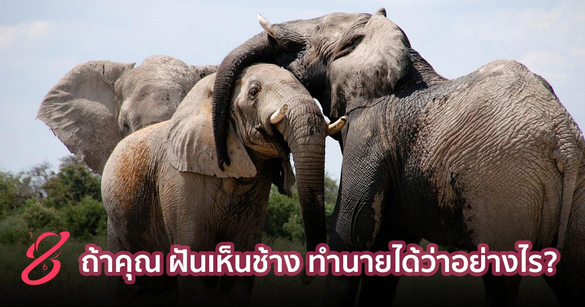 ถ้าคุณ ฝันเห็นช้าง ทำนายได้ว่าอย่างไร?