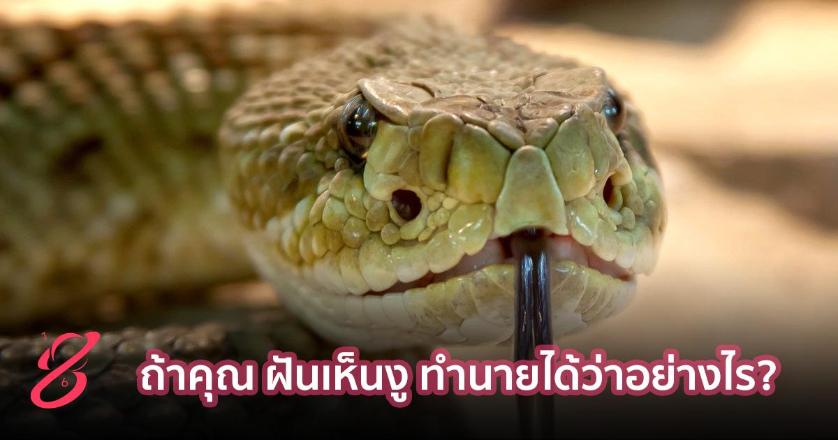 ถ้าคุณ ฝันเห็นงู ทำนายได้ว่าอย่างไร?