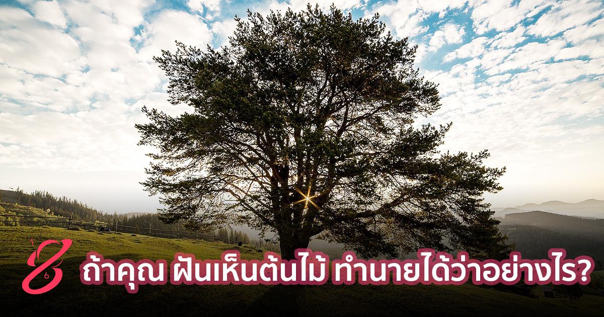ถ้าคุณ ฝันเห็นต้นไม้ ทำนายได้ว่าอย่างไร?