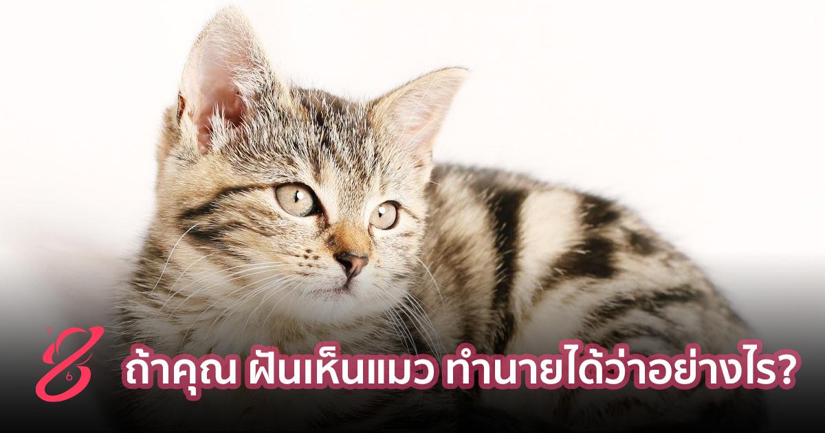 ถ้าคุณ ฝันเห็นแมว ทำนายได้ว่าอย่างไร?