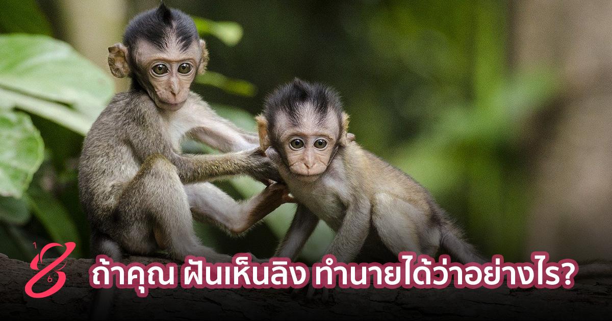 ถ้าคุณ ฝันเห็นลิง ทำนายได้ว่าอย่างไร?