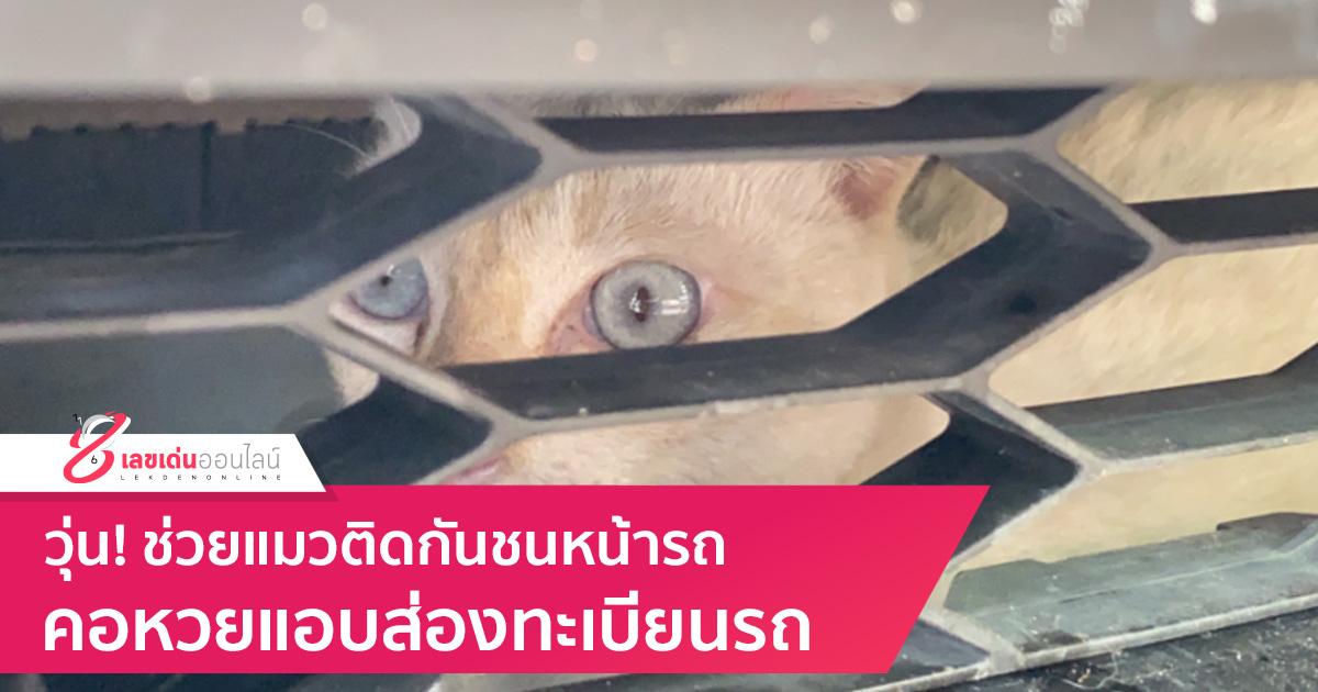 วุ่น! ช่วยแมวติดกันชนหน้ารถ คอหวยแอบส่องทะเบียนรถ