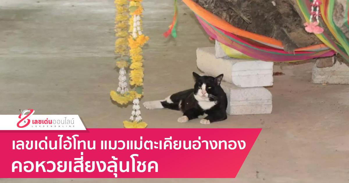 เลขเด่นไอ้โทน แมวแม่ตะเคียนอ่างทอง คอหวยเสี่ยงลุ้นโชค