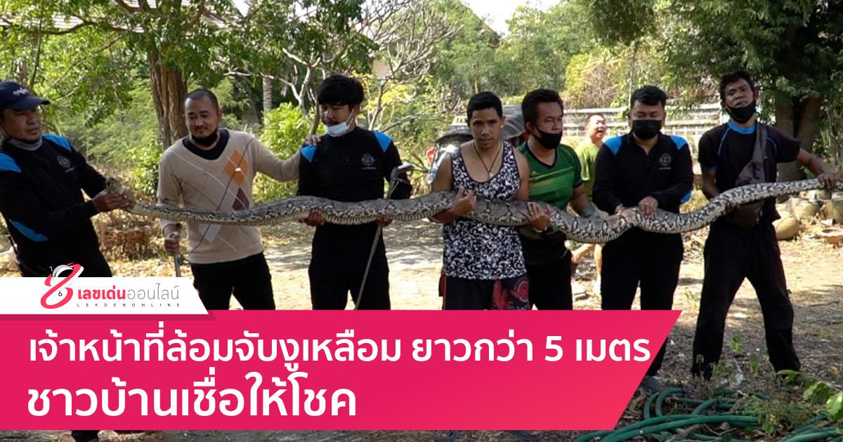 เจ้าหน้าที่ล้อมจับงูเหลือมยาวกว่า 5 เมตร ชาวบ้านเชื่อให้โชค