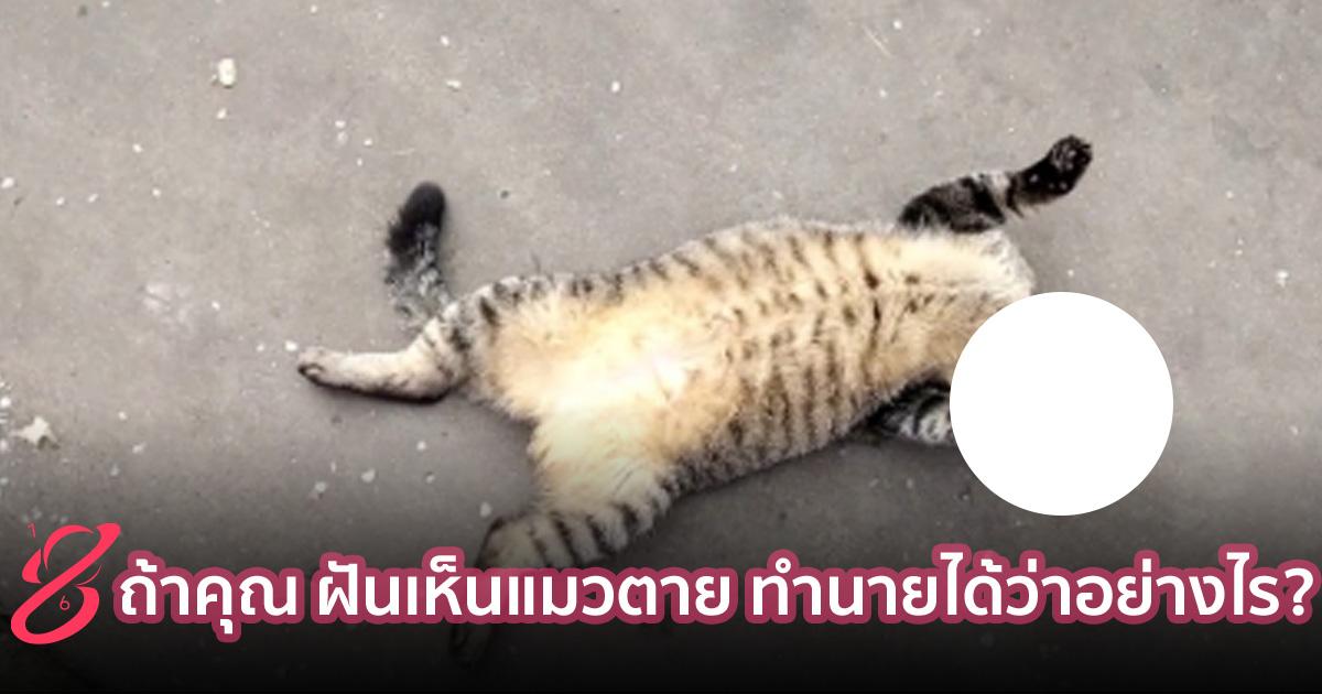 ถ้าคุณ ฝันเห็นแมวตาย ทำนายได้ว่าอย่างไร?