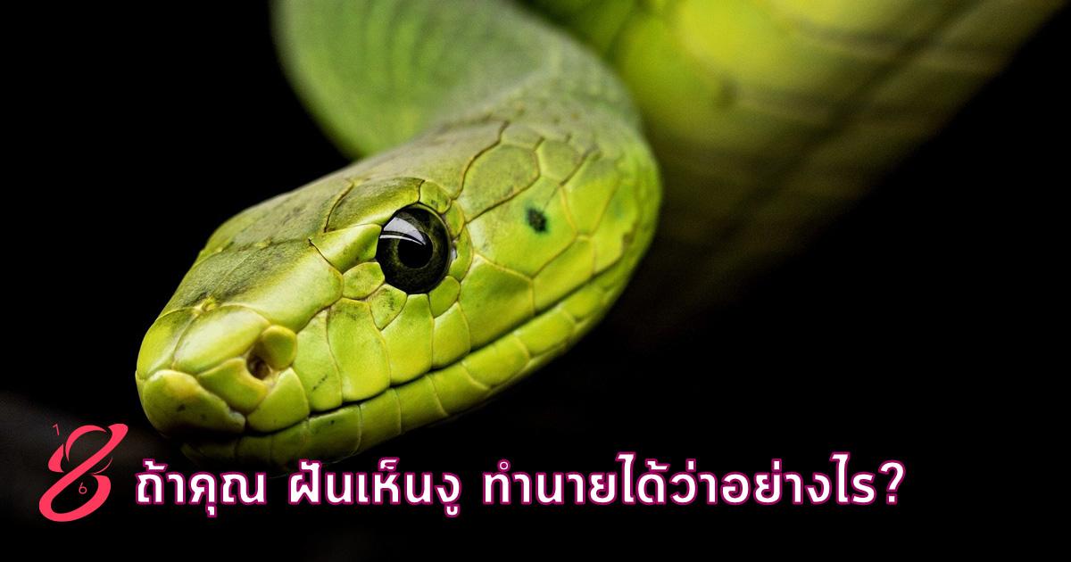 ถ้าคุณ ฝันเห็นงู ฝันว่าโดนงูรัด ทำนายได้ว่าอย่างไร?