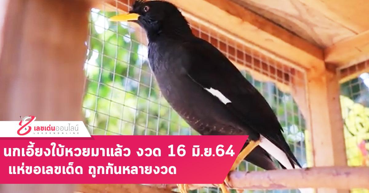นกเอี้ยงใบ้หวยมาแล้ว งวดนี้ 16 มิ.ย.64 แห่ขอเลขเด็ด ถูกกันหลายงวด