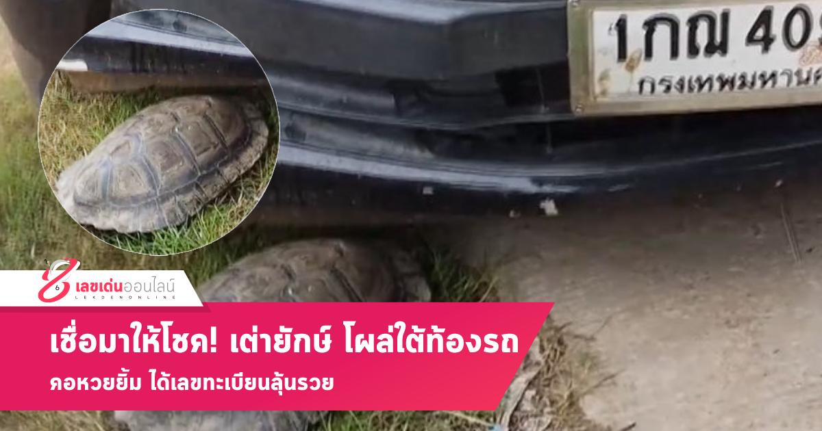 เชื่อมาให้โชค! เจอเต่ายักษ์ โผล่จากใต้ท้องรถ คอหวยยิ้ม ได้เลขทะเบียนลุ้นรวย